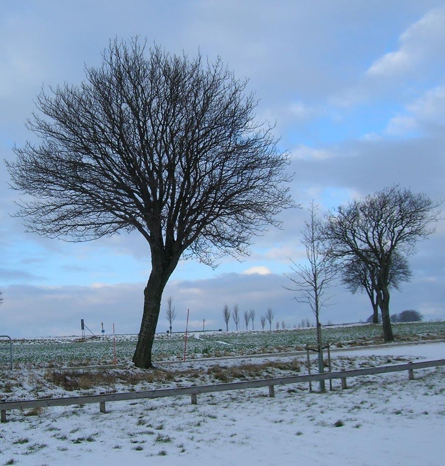 träd februari